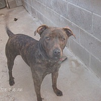 Adopt A Pet :: JUBAL - KELLYVILLE, OK