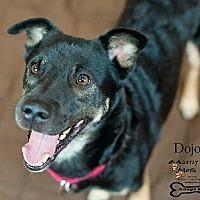 Shepherd (Unknown Type) Mix Dog for adoption in Kennesaw, Georgia - Dojo
