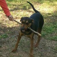 Adopt A Pet :: Monty/Caesar - Wichita, KS