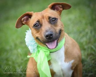 Terrier (Unknown Type, Small) Mix Dog for adoption in Miami, Florida - Nancy