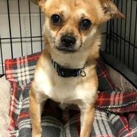 Adopt A Pet :: Moe - Wellsville, NY