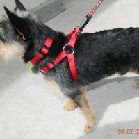 Adopt A Pet :: Dollar - Umatilla, FL