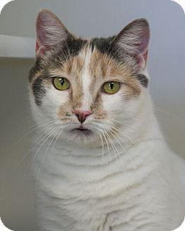Calico Cat for adoption in Staunton, Virginia - Baby