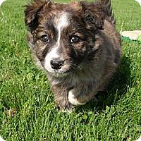Adopt A Pet :: Cuddles #5179 - Jerome, ID