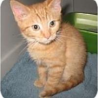 Adopt A Pet :: Jester - Shelton, WA