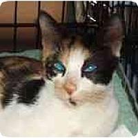 Adopt A Pet :: Dolly - Jenkintown, PA