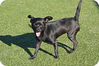 Chihuahua Mix Dog for adoption in Meridian, Idaho - Nancy