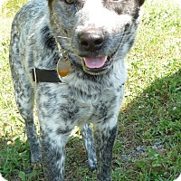 Adopt A Pet :: Patch - Lebanon, CT