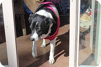 Border Collie Mix Dog for adoption in Creston, California - Tulsa
