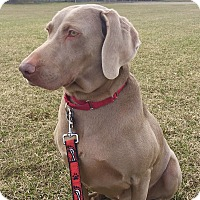 Adopt A Pet :: Luna - Grand Haven, MI