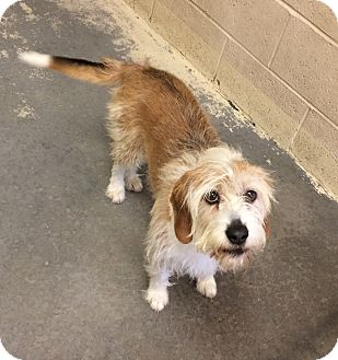 Terrier (Unknown Type, Medium)/Terrier (Unknown Type, Small) Mix Dog for adoption in Greensburg, Pennsylvania - Max