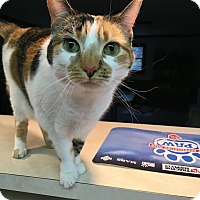 Adopt A Pet :: Allie - Norwich, NY