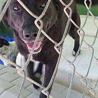 Adopt A Pet :: Anita - Pembroke, GA