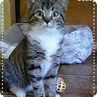 Adopt A Pet :: Dewey - Shippenville, PA