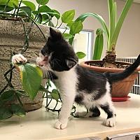 Adopt A Pet :: Spunky - Salisbury, NC