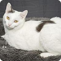 Adopt A Pet :: Joanie - Waynesboro, PA