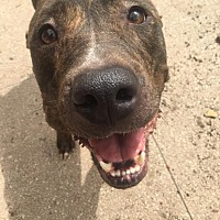 Adopt A Pet :: Millie - Needs Foster Home - Waggaman, LA