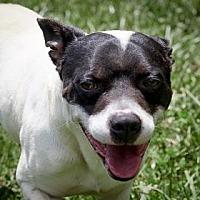 Adopt A Pet :: Zorro - Lincolnton, NC