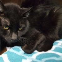 Adopt A Pet :: Blake - Erie, PA