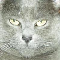 Adopt A Pet :: Cinderella - Hayward, WI