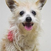 Adopt A Pet :: RYLEE - Pleasanton, CA