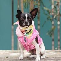 Adopt A Pet :: Britta - Pacific Grove, CA