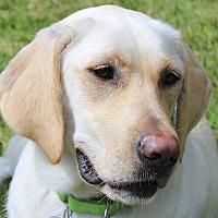 Adopt A Pet :: LILITH - Albany, NY