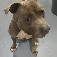 Adopt A Pet :: 17-09-2885a Jesse - Dallas, GA