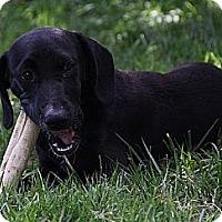 Adopt A Pet :: Jackie - Staunton, VA