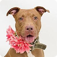 Adopt A Pet :: Poet - Ocoee, FL