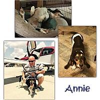 Adopt A Pet :: Annie - Marietta, GA