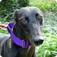 Adopt A Pet :: Essie - Spencerville, MD