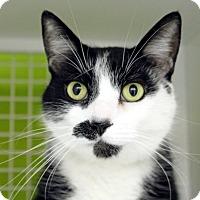 Adopt A Pet :: Chaplin - Troy, MI