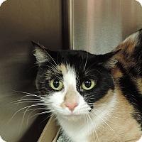 Adopt A Pet :: LITTLE GIRL - Sioux City, IA
