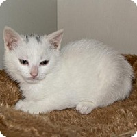 Adopt A Pet :: Peach - Hamilton, ON