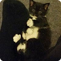 Adopt A Pet :: Bonnie - Butner, NC