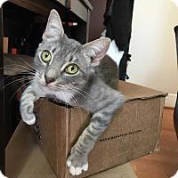 Adopt A Pet :: Aria - Washington, DC