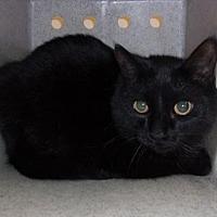Adopt A Pet :: Blackie - Reno, NV