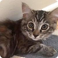 Adopt A Pet :: Chessie - LaJolla, CA