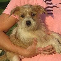 Adopt A Pet :: Chang - Westport, CT