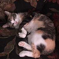 Adopt A Pet :: Aribella - Muskegon, MI