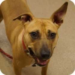 Terrier (Unknown Type, Medium) Mix Dog for adoption in Eatontown, New Jersey - Queenie