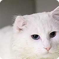 Adopt A Pet :: Trumpeter - Chicago, IL