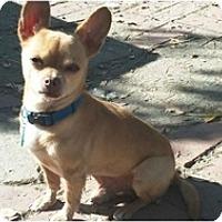 Adopt A Pet :: Muchacho - West Hills, CA