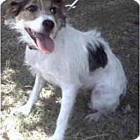 Adopt A Pet :: LUCY - Phoenix, AZ