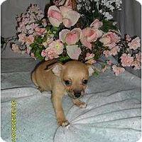 Adopt A Pet :: Puppy 4 - Chandlersville, OH