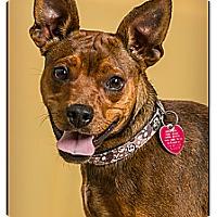 Adopt A Pet :: Gunner - Owensboro, KY