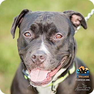 Pit Bull Terrier Mix Dog for adoption in Evansville, Indiana - Allie