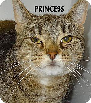 Domestic Shorthair Cat for adoption in Lapeer, Michigan - PRINCESS--PRETTY TABBY