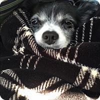Adopt A Pet :: Daisy Mae - Sacramento, CA
